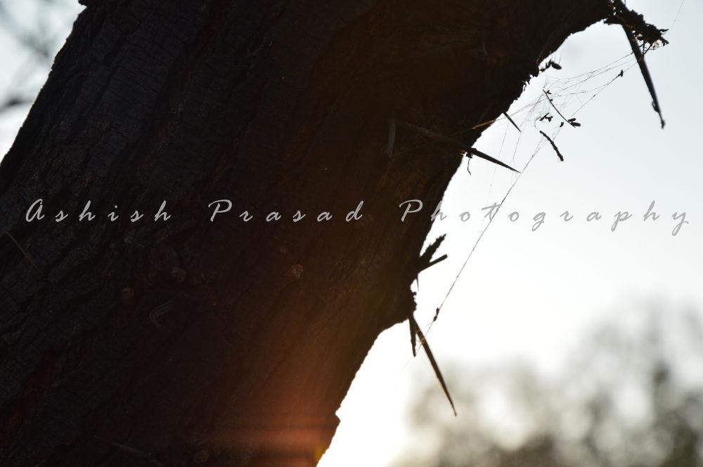 DSC_05932 by Ashish Prasad