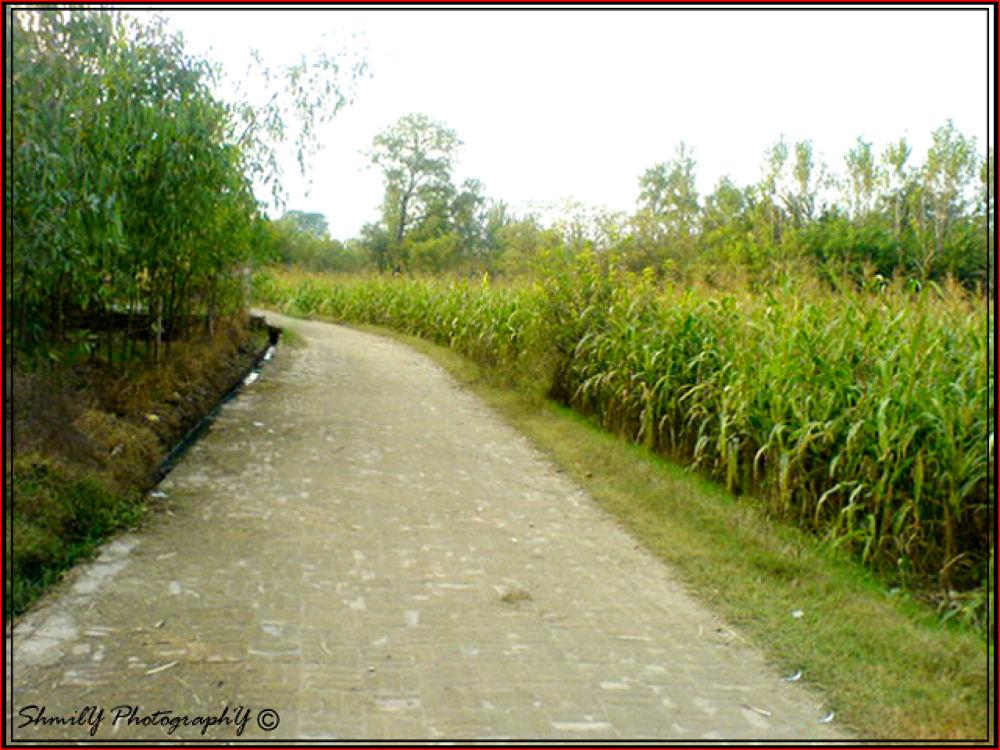 way to nowhere by MurtazA KhurshiD