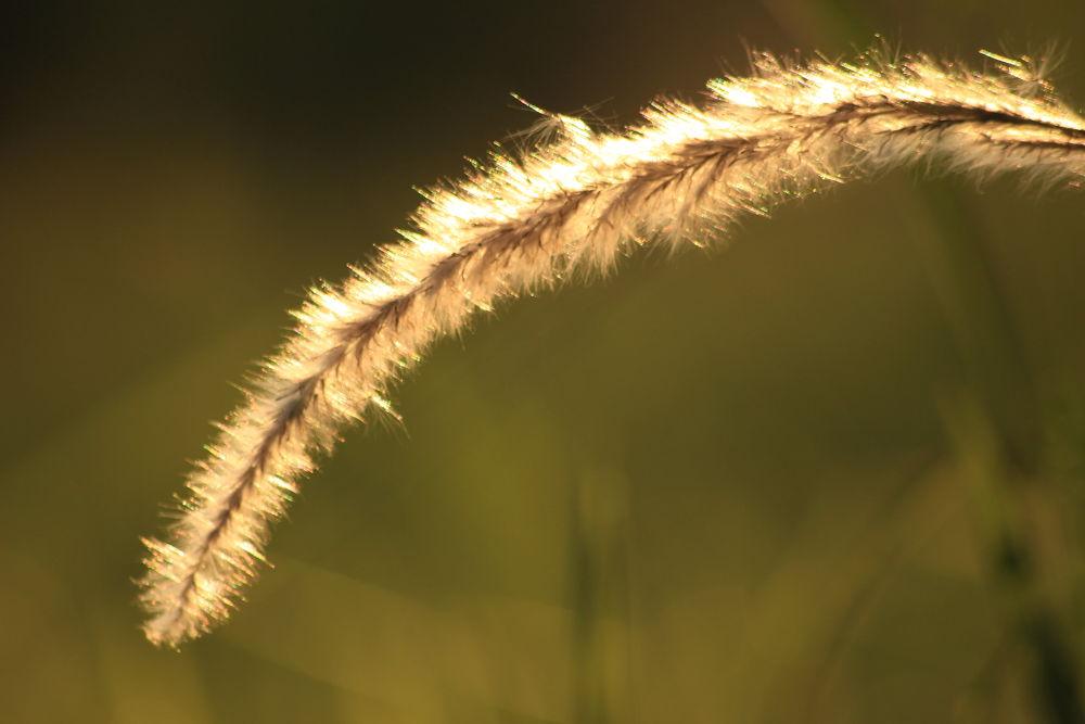 weeds by cakramli71