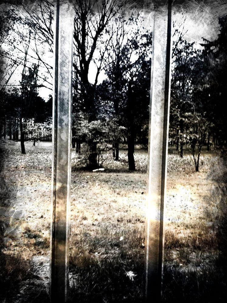 The Cage by eddiesantillo