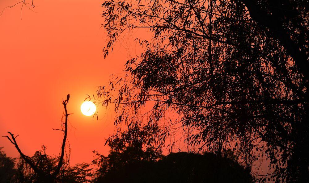 Bird & Sunset by RajeshwarPuvvada