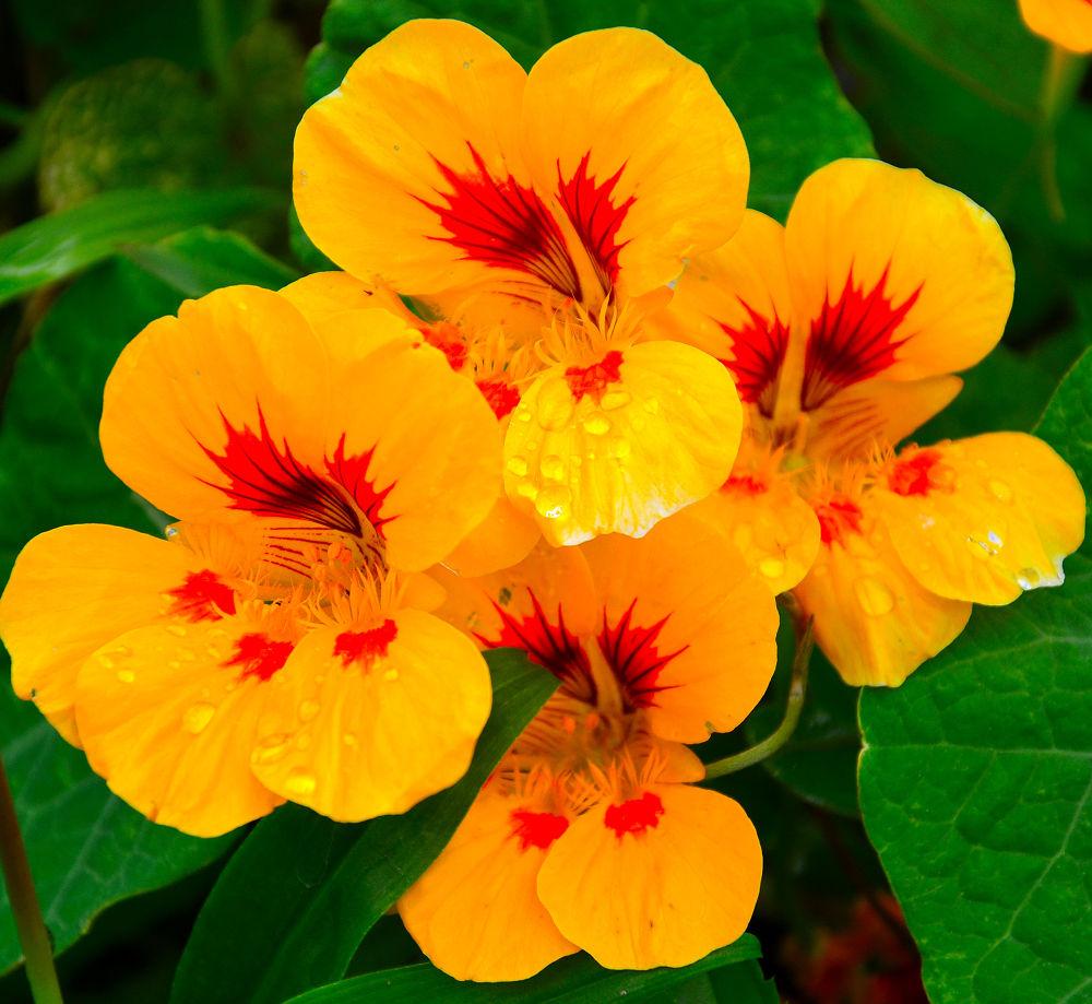 Yellow beauty by RajeshwarPuvvada