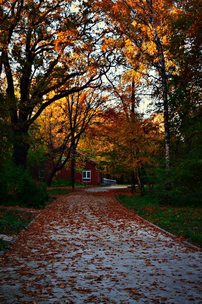 Autumn in the Botanical Garden by Adina C.