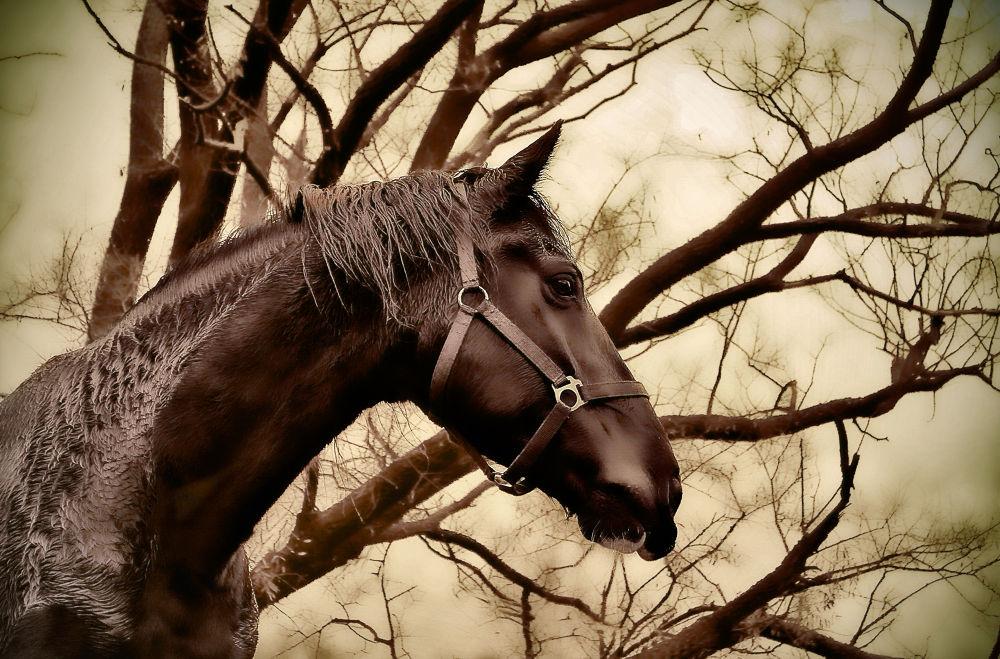 Horse 1 by farhado