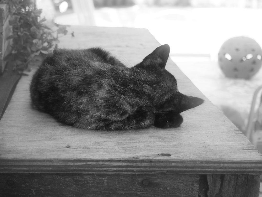 Cat in America - Nebraska by Yoshiko Komatsu