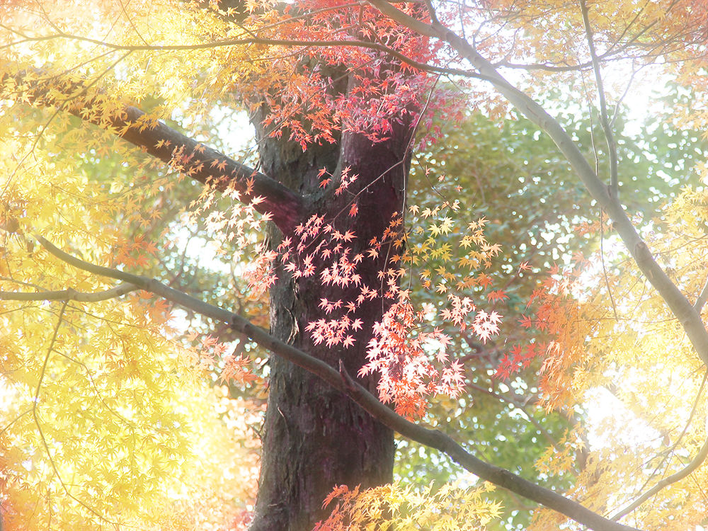 Landscape by Yoshiko Komatsu