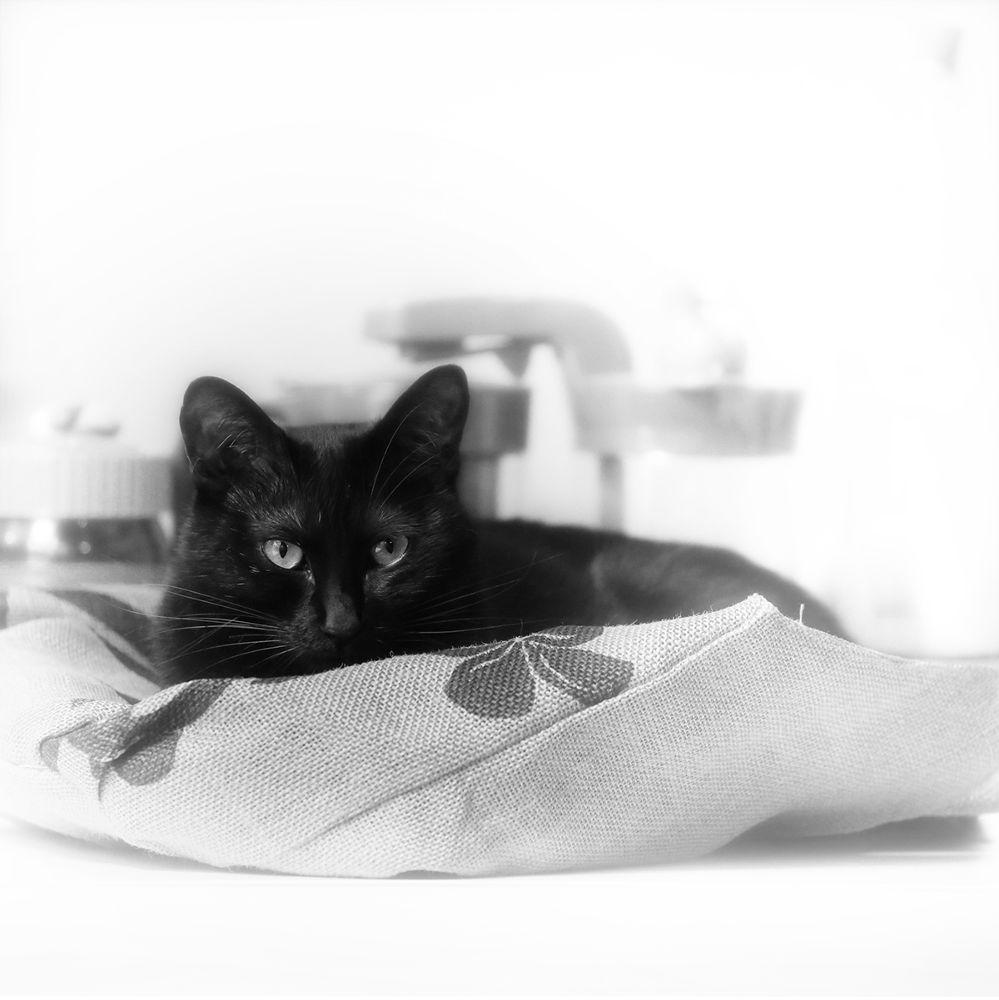Japanese Cat - nana by Yoshiko Komatsu