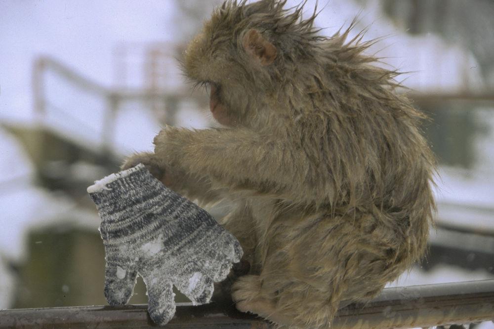 Snow monkey by Yoshiko Komatsu