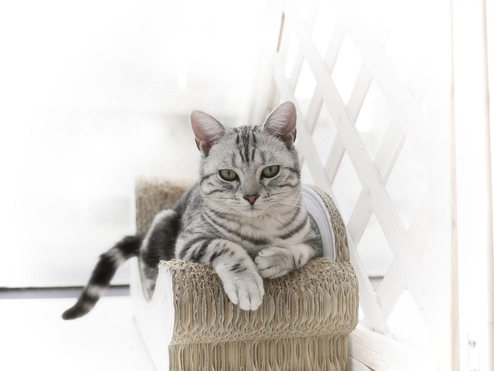 Japanese Cat by Yoshiko Komatsu