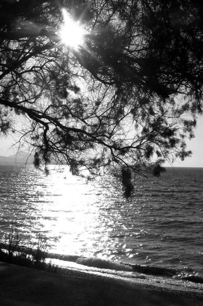 DSC_0094 by moshe cohen-solal