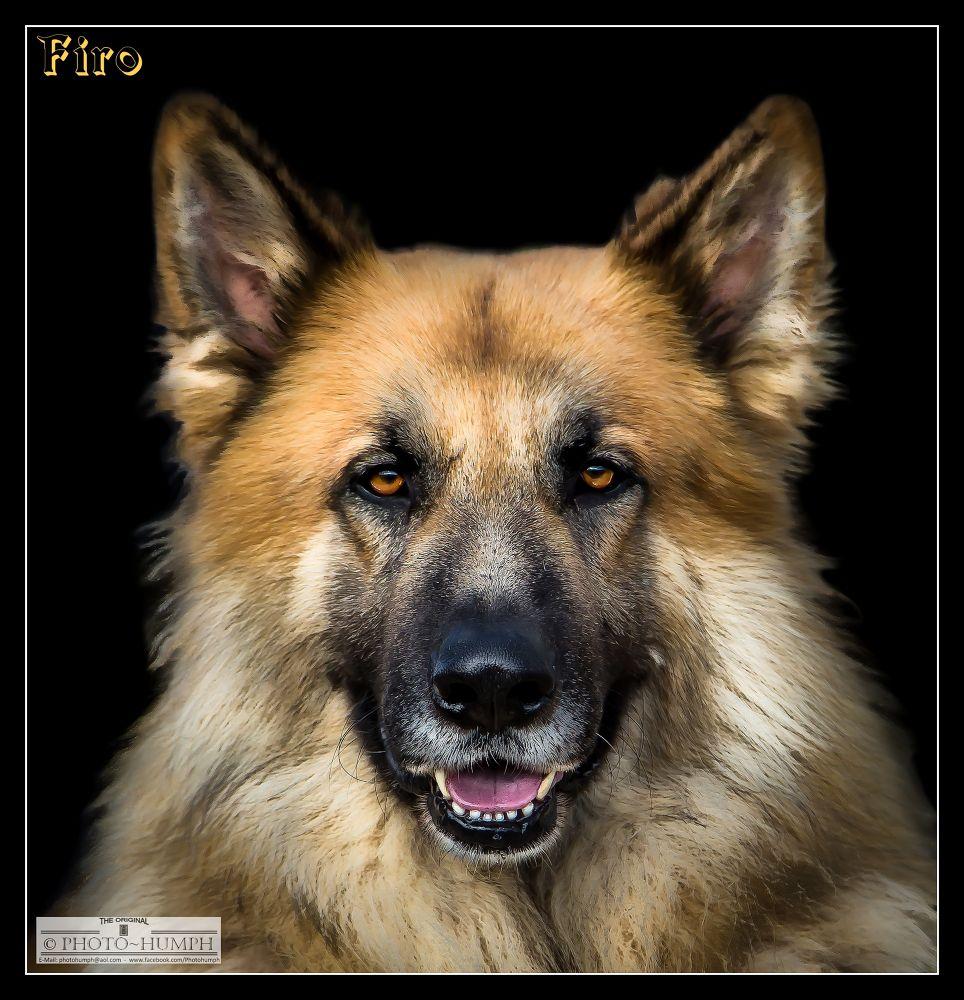 FIRO ~ Amber's Daddy :) by Photohumph