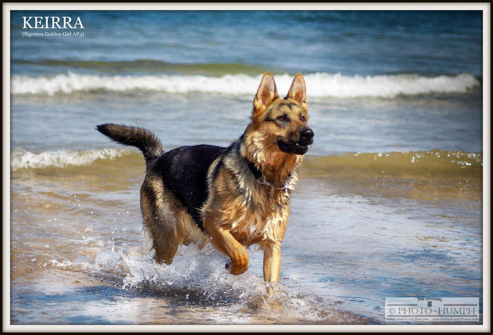 Lady Keirra  (Siegerson Golden Girl) @ 9 Months old by Photohumph