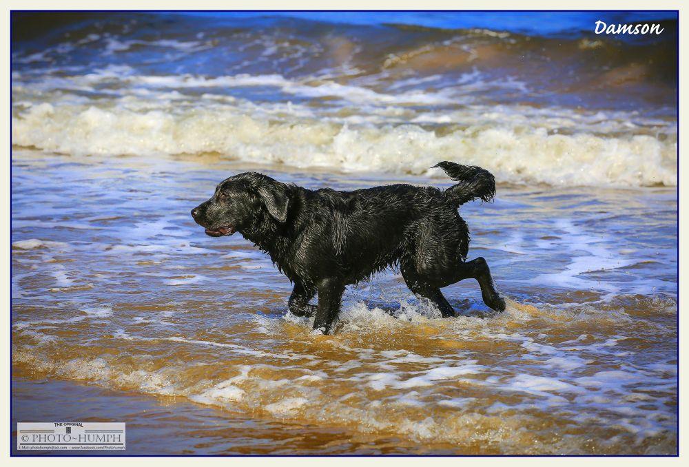 Dog by Photohumph