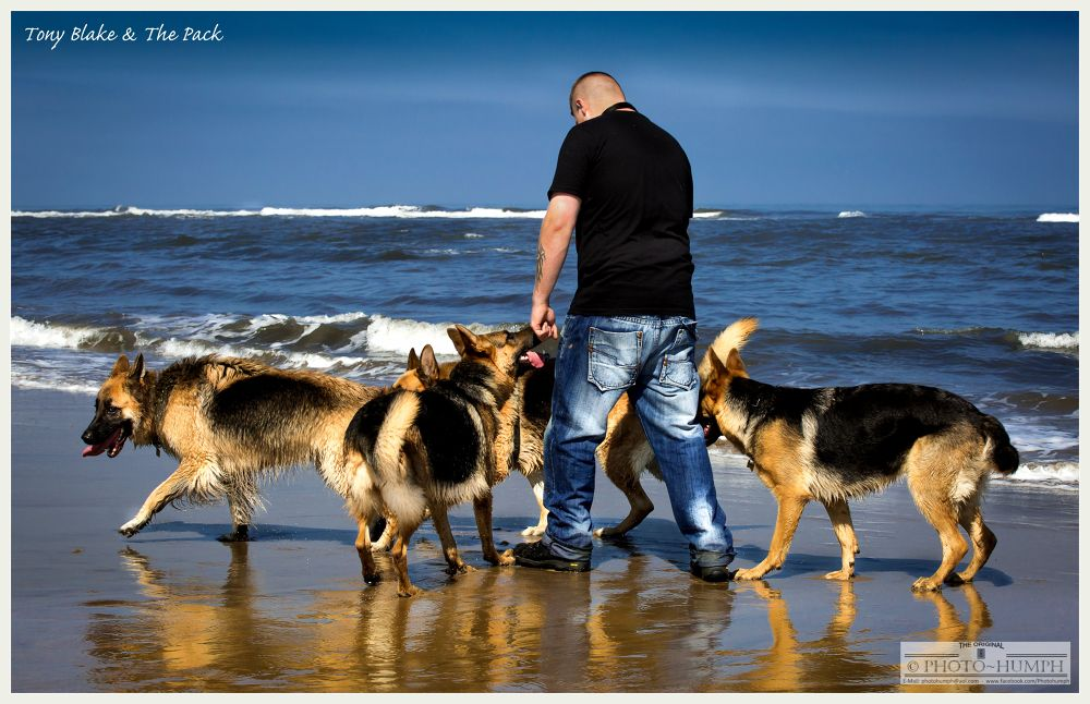 GSD Whisperer by Photohumph