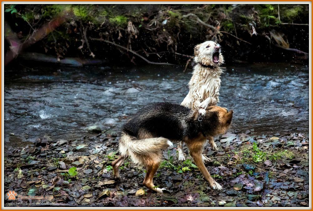 Aoife's Friends Walk Group ~ Lumley Castle Walk 04:01:2014 by Photohumph