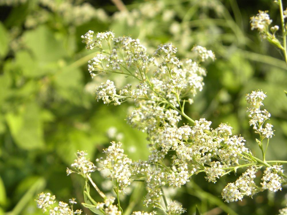 Herb by moteza nooran