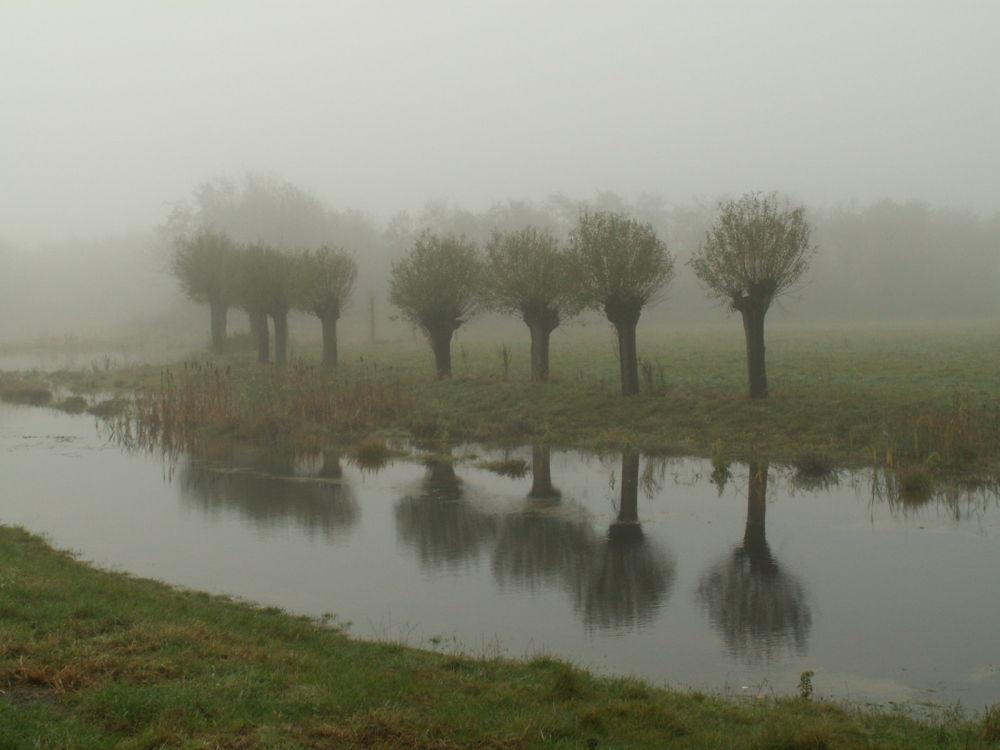 9 by JanMulder