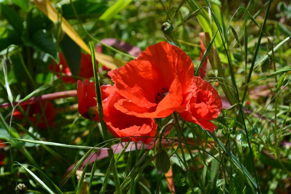 Rosso al sole by giuseppegorgero