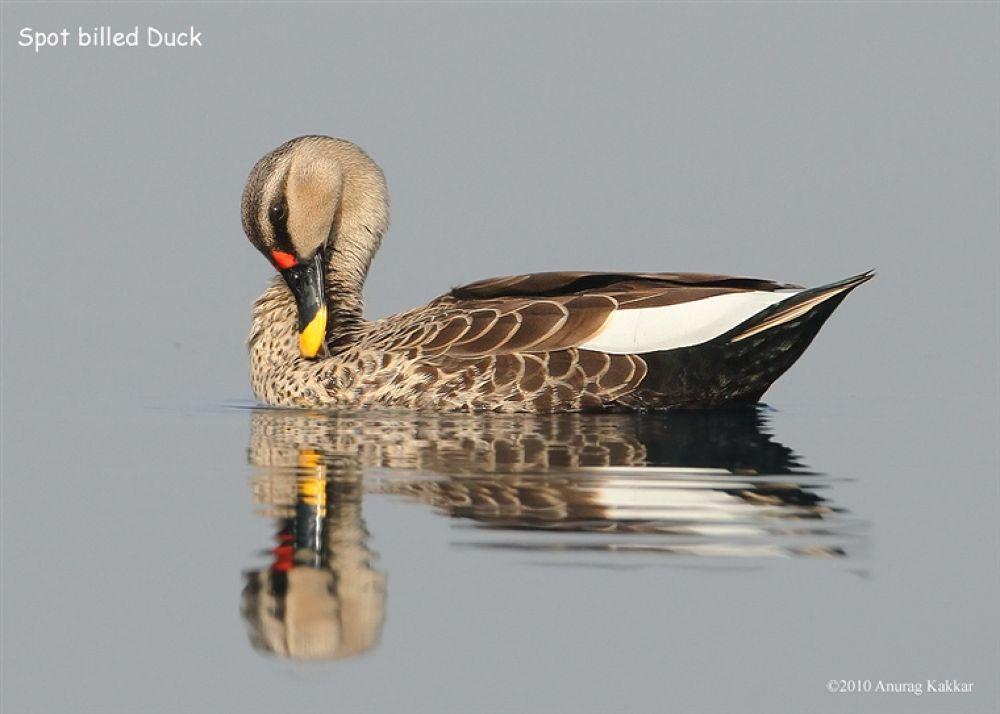 Photo in Random #bird #okhla #sanctuary