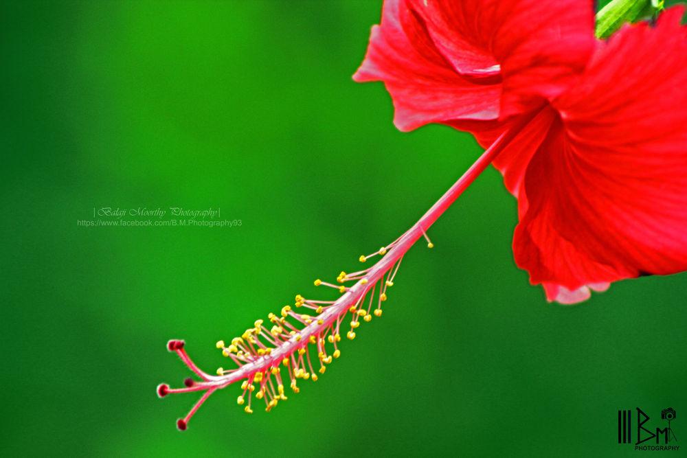 Beauty so close by BalajiMoorthyPhotography