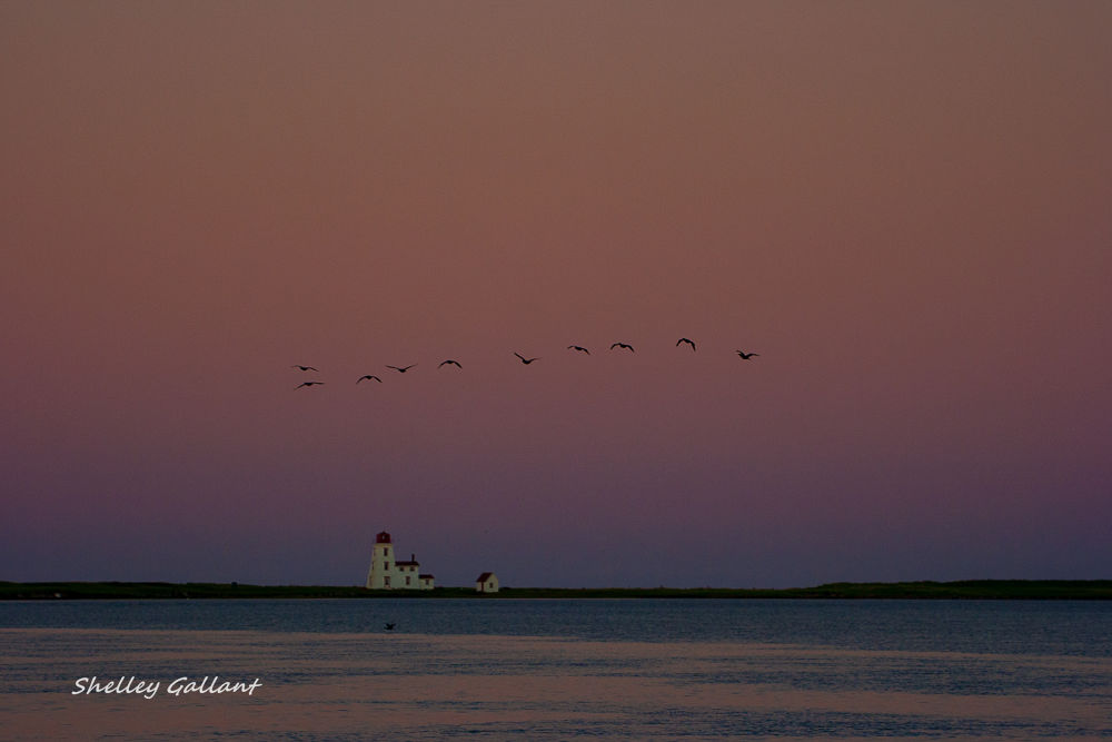 Fly Away Home IMG_4376-1 by shelleygallant501