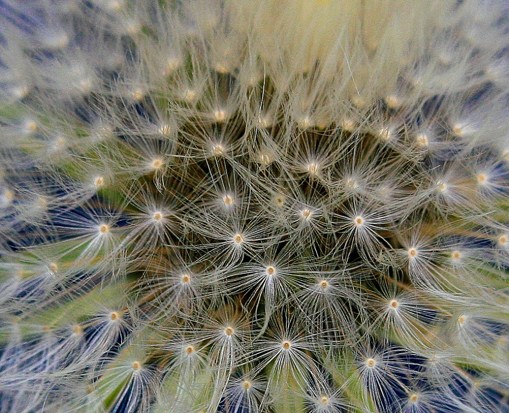 Seed_MG_5681 by shelleygallant501