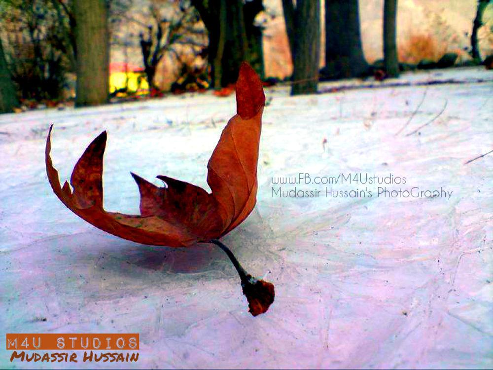 winter by Mudassir Hussain