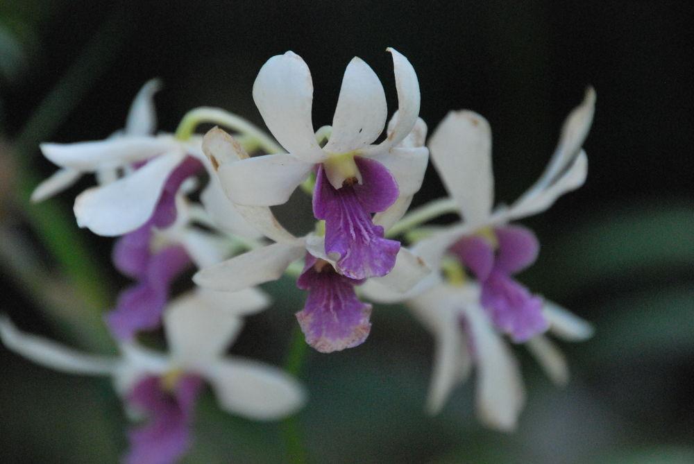orchid circle by amybudd1