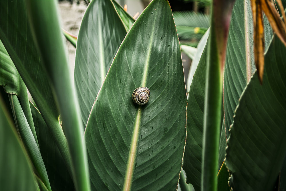 snail on the leaf by Hadi Morovat