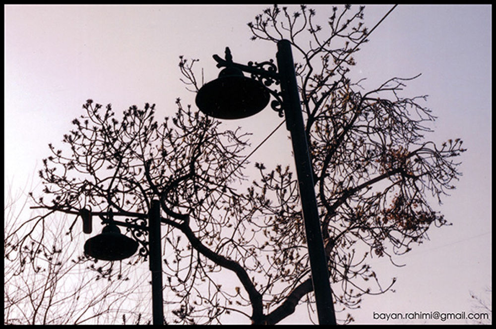 Iron garden by Bayan_Rahimi