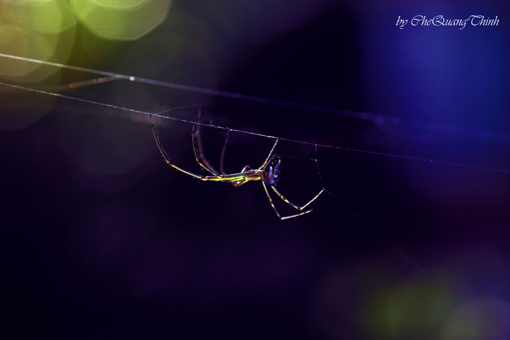 The spider with colourful by chethinh