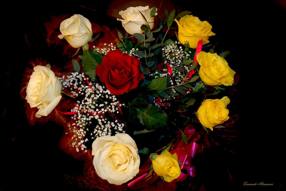 rose ! by fernanduk