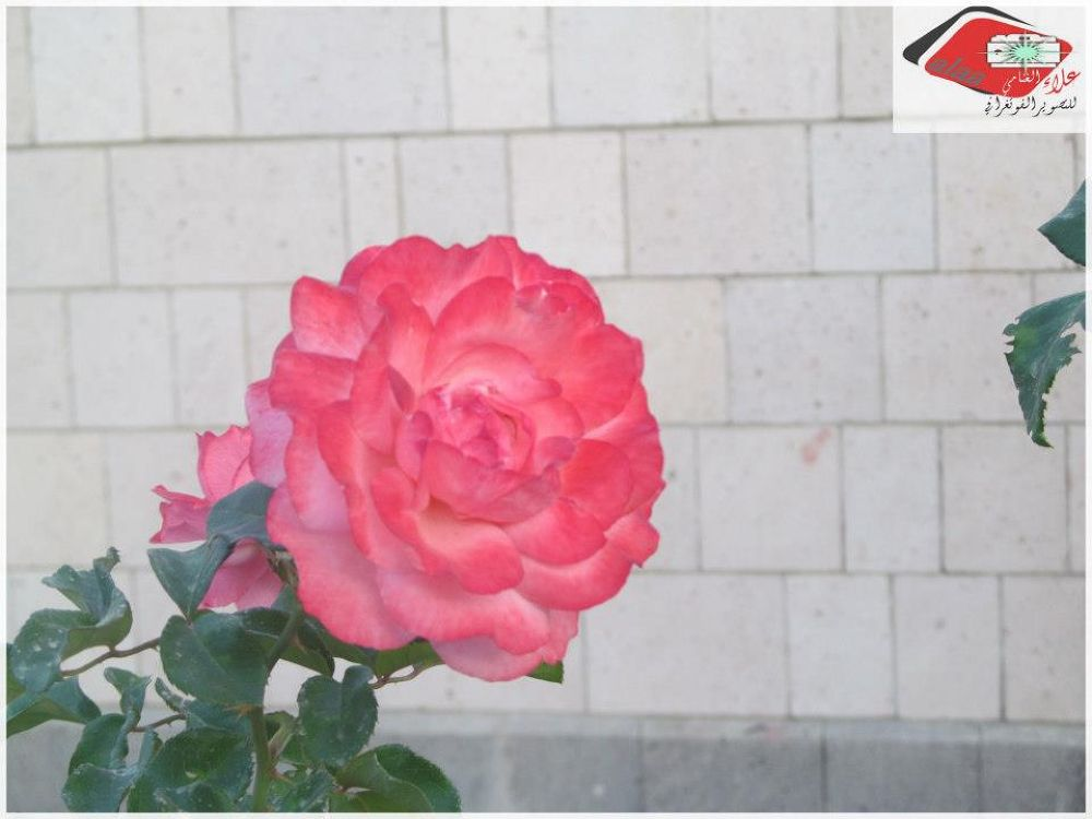 149357_119093614931942_1769910189_n by Ala Alghannami