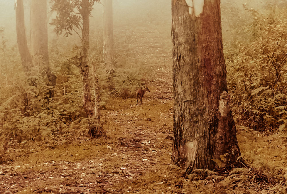 Deer in forest by Vinoth S