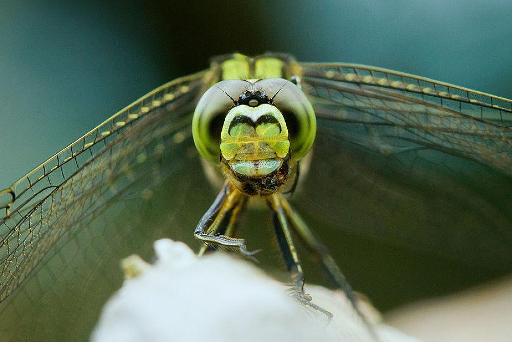 Ground Skimmer by wawanfocusfeel