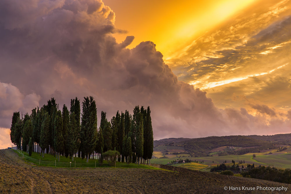 Cyprus grove at sunset by Hans Kruse