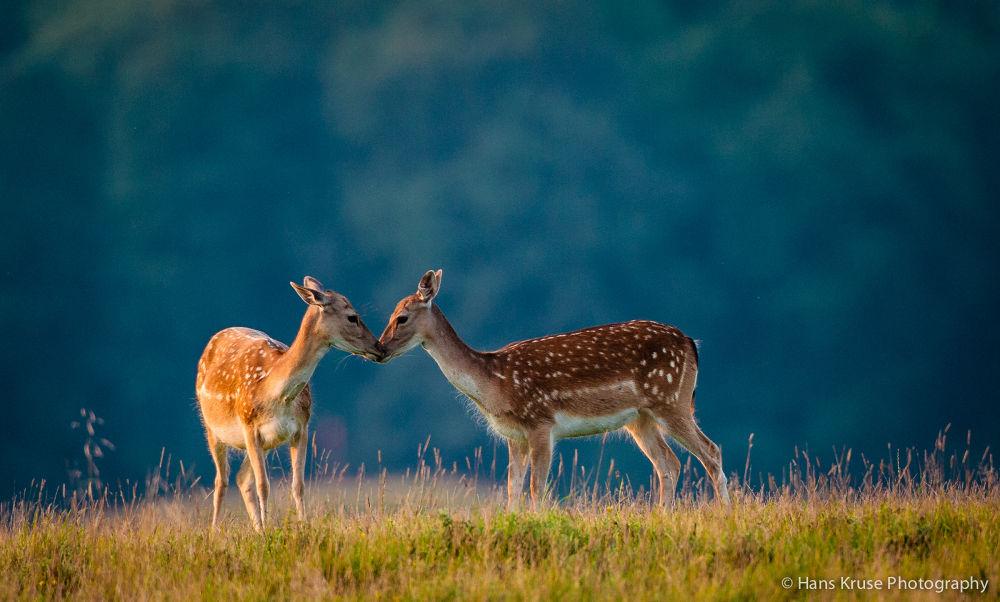 Photo in Animal #denmark #deer #dyrehaven #copenhagen