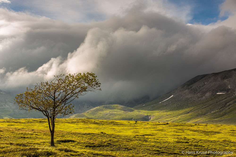 Lonely tree on Campo Imperatore by Hans Kruse