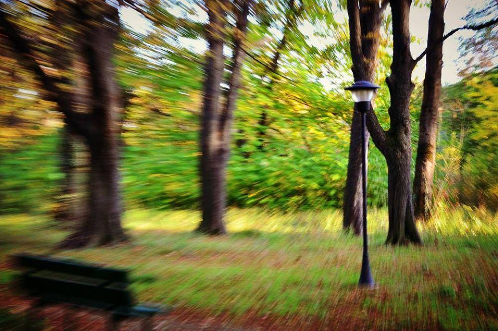 Autumn zoom by Alexandra - Ioana Pascariu