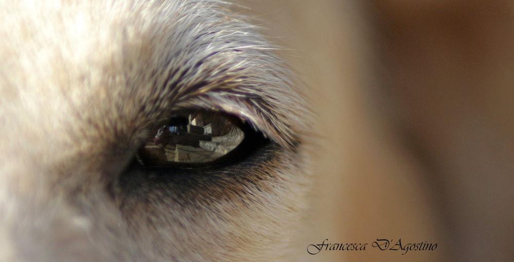 Mirror eyes by Francesca D'Agostino