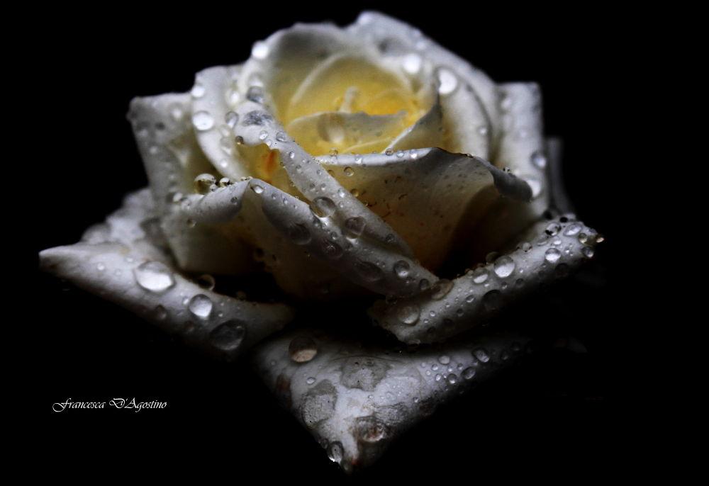 Photo in Random #rosa bianca #gocce