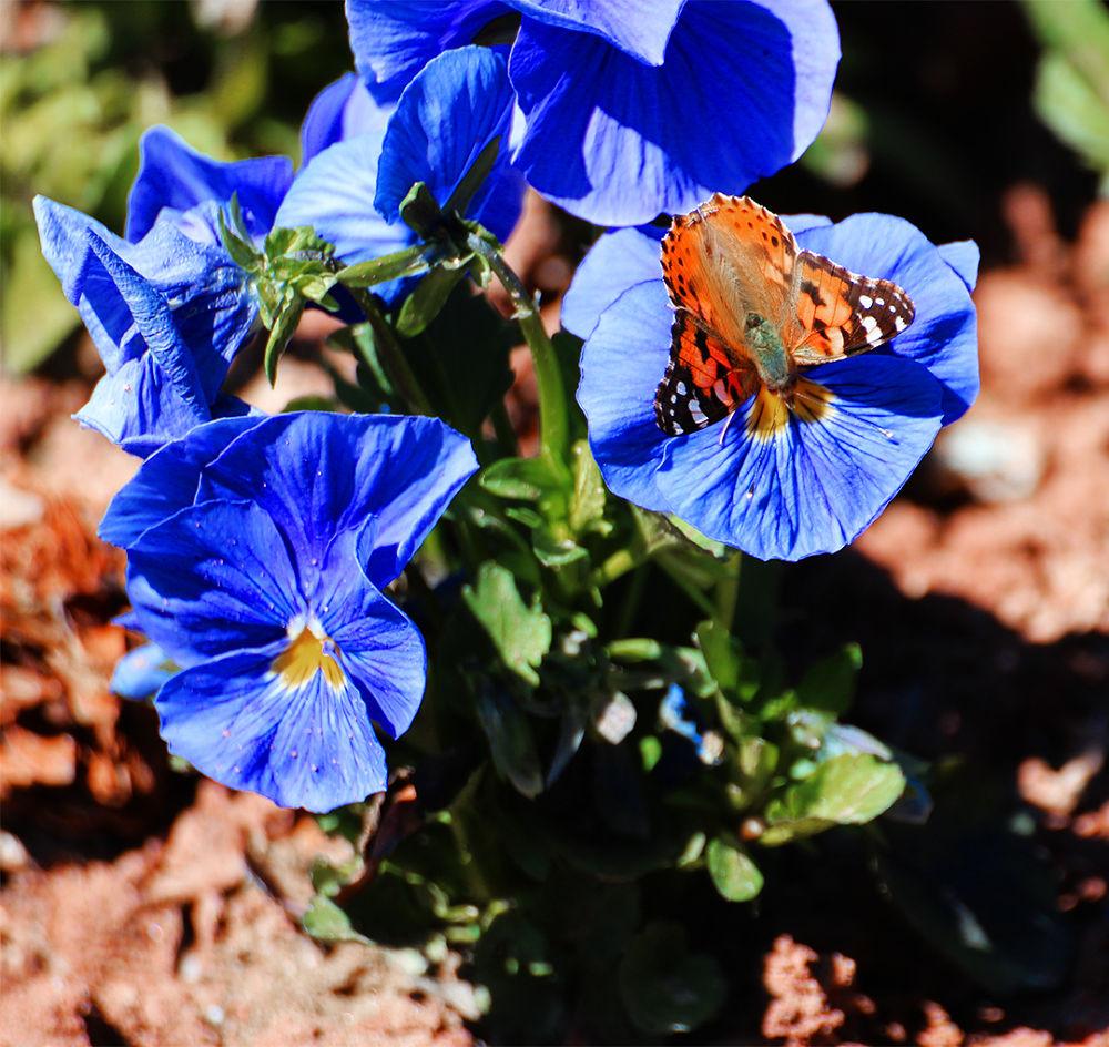 kelebek  by handanoran01