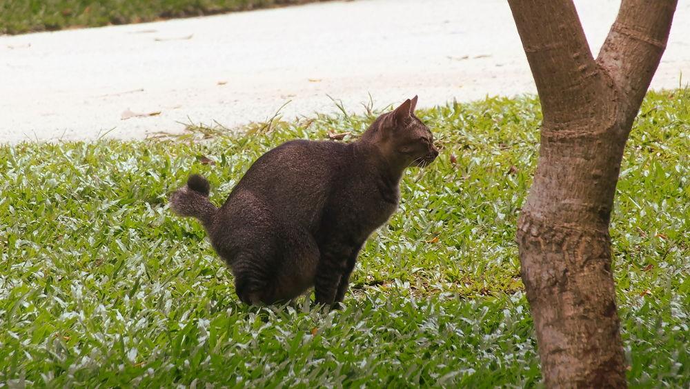 pregnant cat by hermantomahyuddin