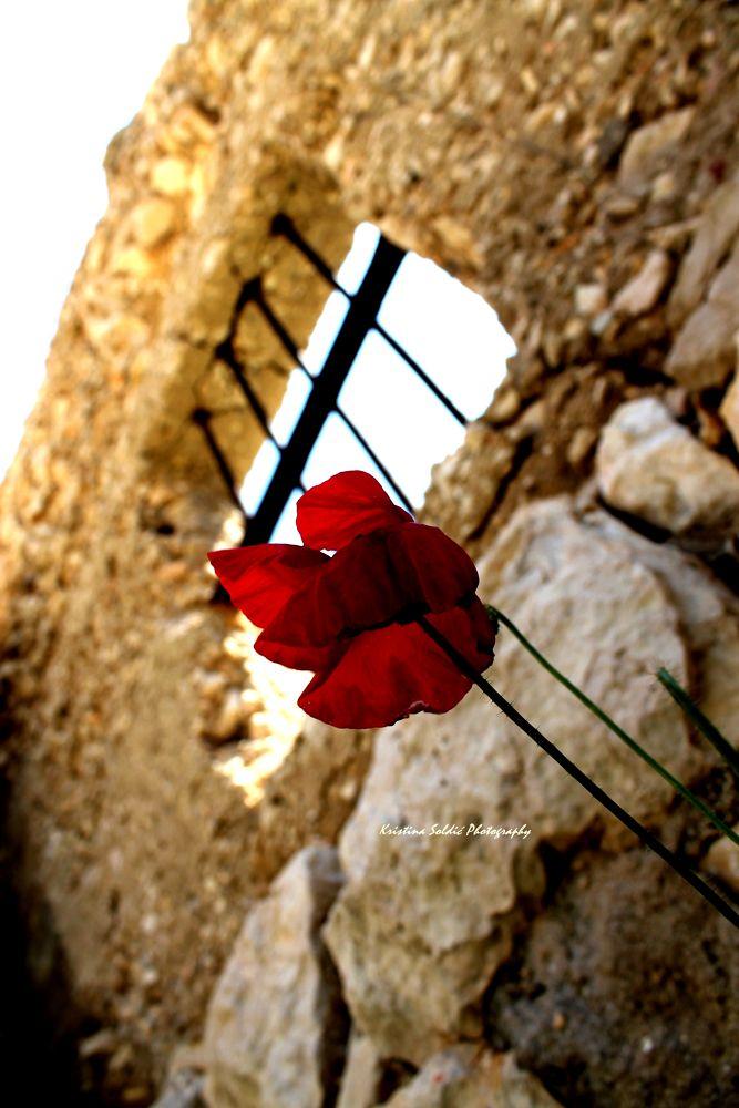 IMG_4039 by kristinasoldic
