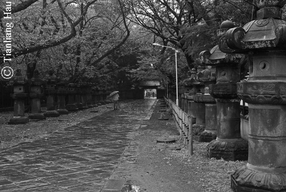 A Passage to Ueno Toshogu Shrine  by Tianliang Hau