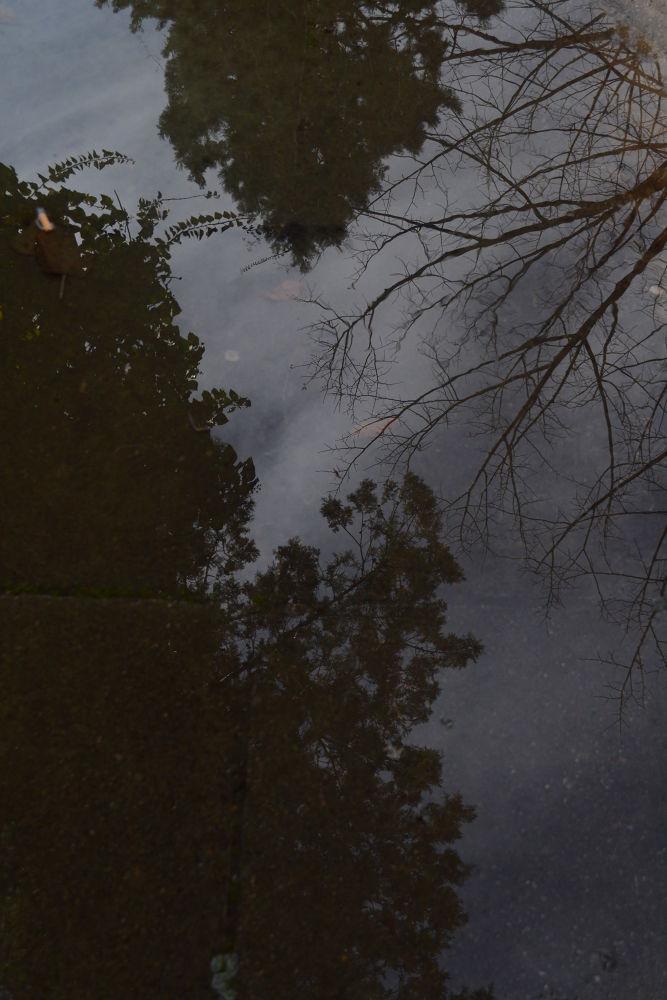 reflection  by Karla Obad