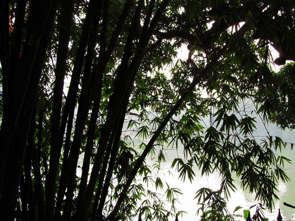 Nature by pritam Biswas