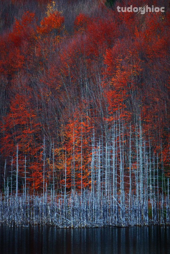 Autumn colors by tudorghioc