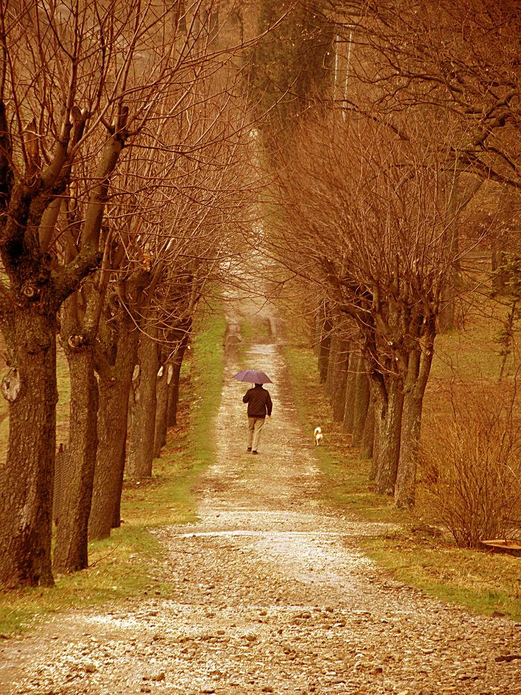 walk by dragoslavljujic