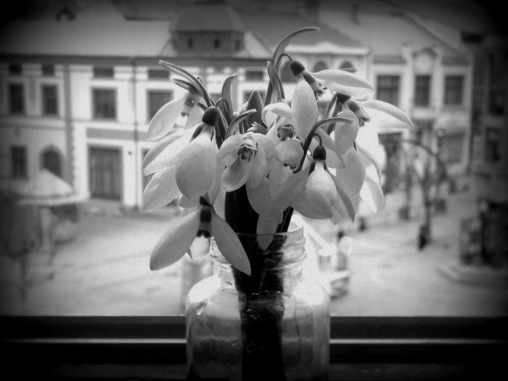 city through flowers1 by zelenasovica